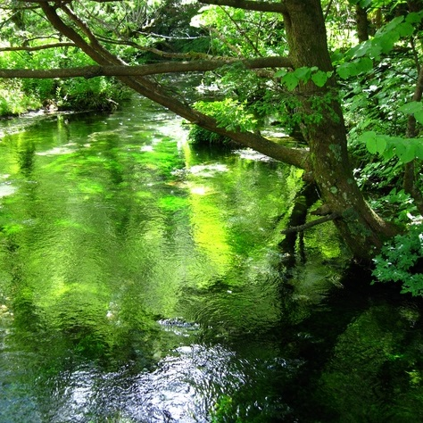 『神秘の泉「ルルドの水」から生まれたSalyブースター』